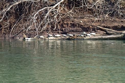 Turtle pile